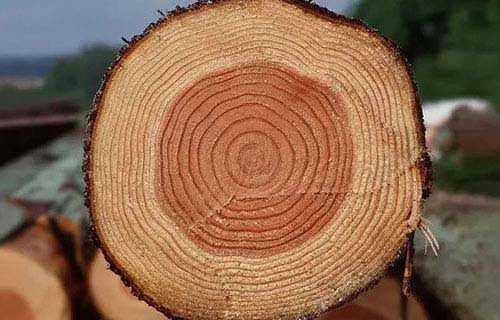 如何判断树龄