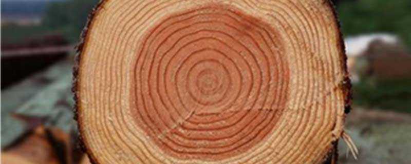 树的年轮较密的地方向着什么面
