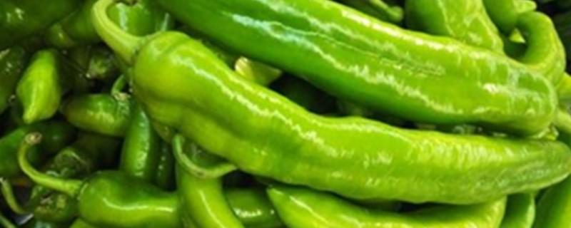 青椒怎么保存最好
