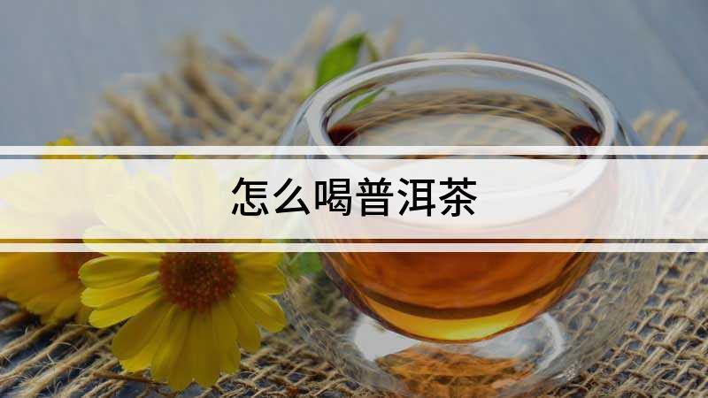 怎么喝普洱茶