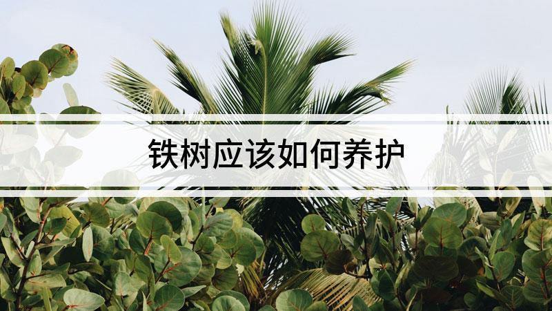 铁树应该如何养护