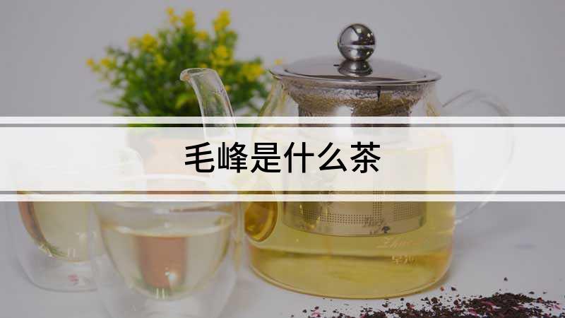 毛峰是什么茶