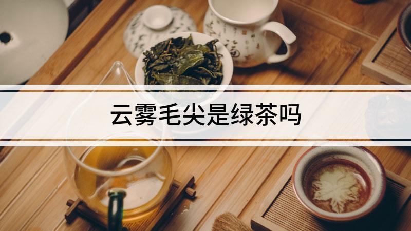 云雾毛尖是绿茶吗