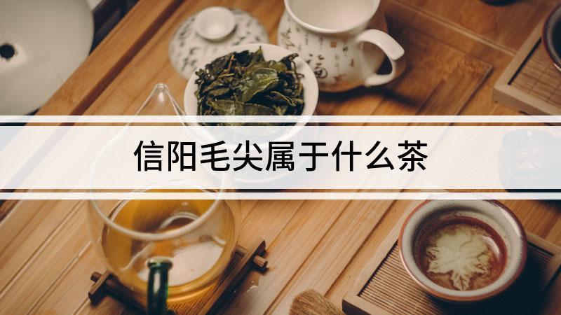 信阳毛尖属于什么茶
