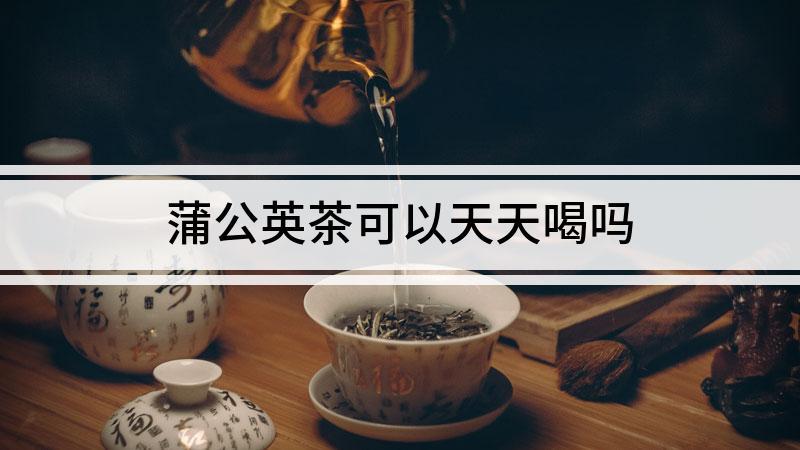 蒲公英茶可以天天喝吗