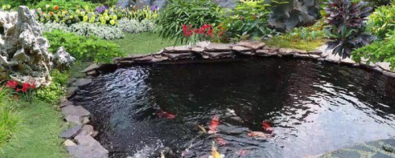 怎样让鱼池水变清澈