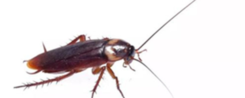 家里有蟑螂是什么原因造成的