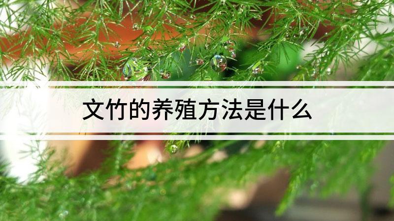 文竹的养殖方法是什么
