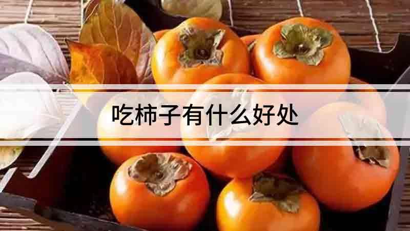 吃柿子有什么好處