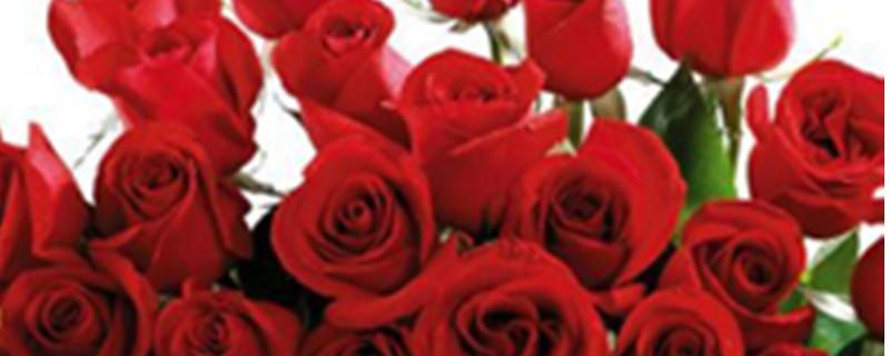 玫瑰花怎么保存