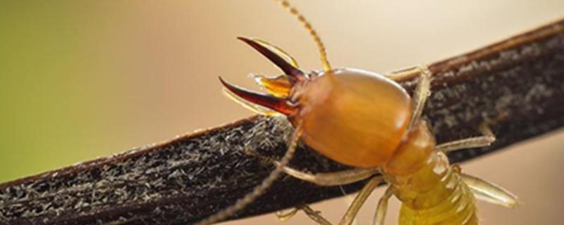 怎么消灭水蚁