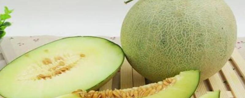 玲珑瓜是不是哈密瓜