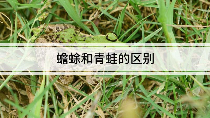 蟾蜍和青蛙的区别