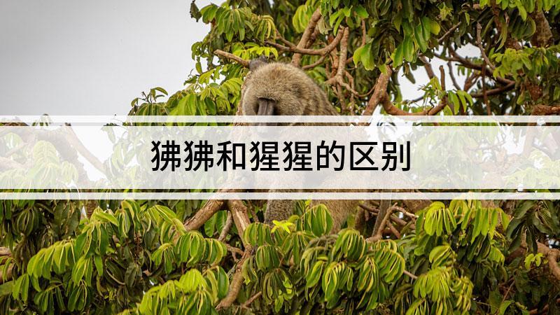 狒狒和猩猩的区别