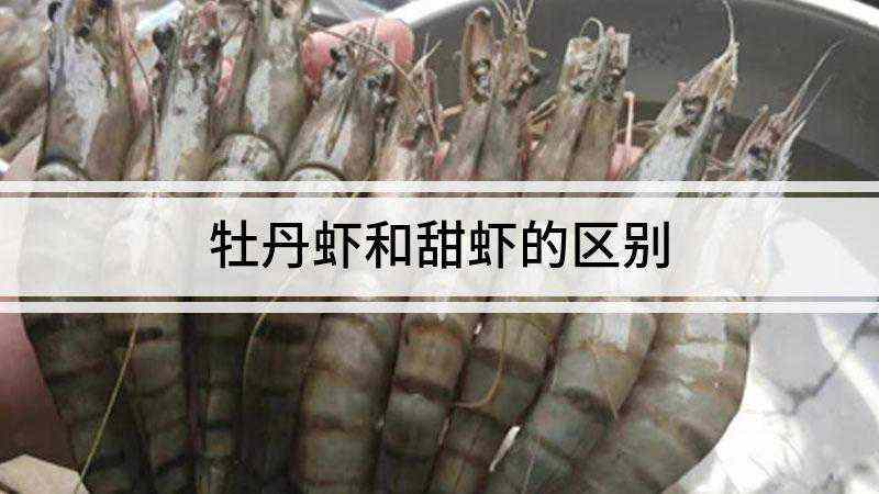 牡丹虾和甜虾的区别