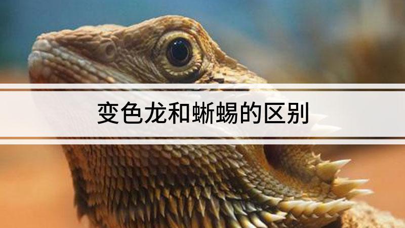 变色龙和蜥蜴的区别