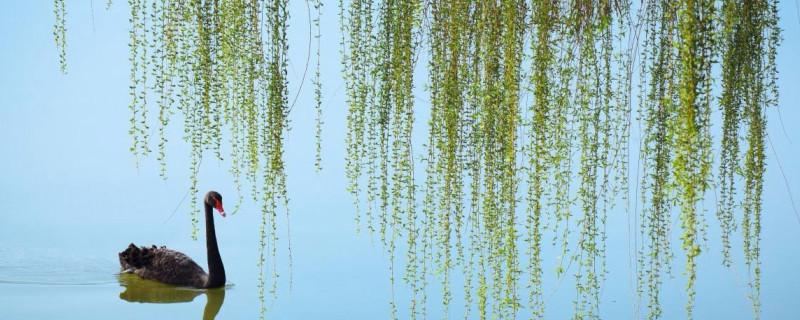 已带斜阳又带蝉描写的植物是什么